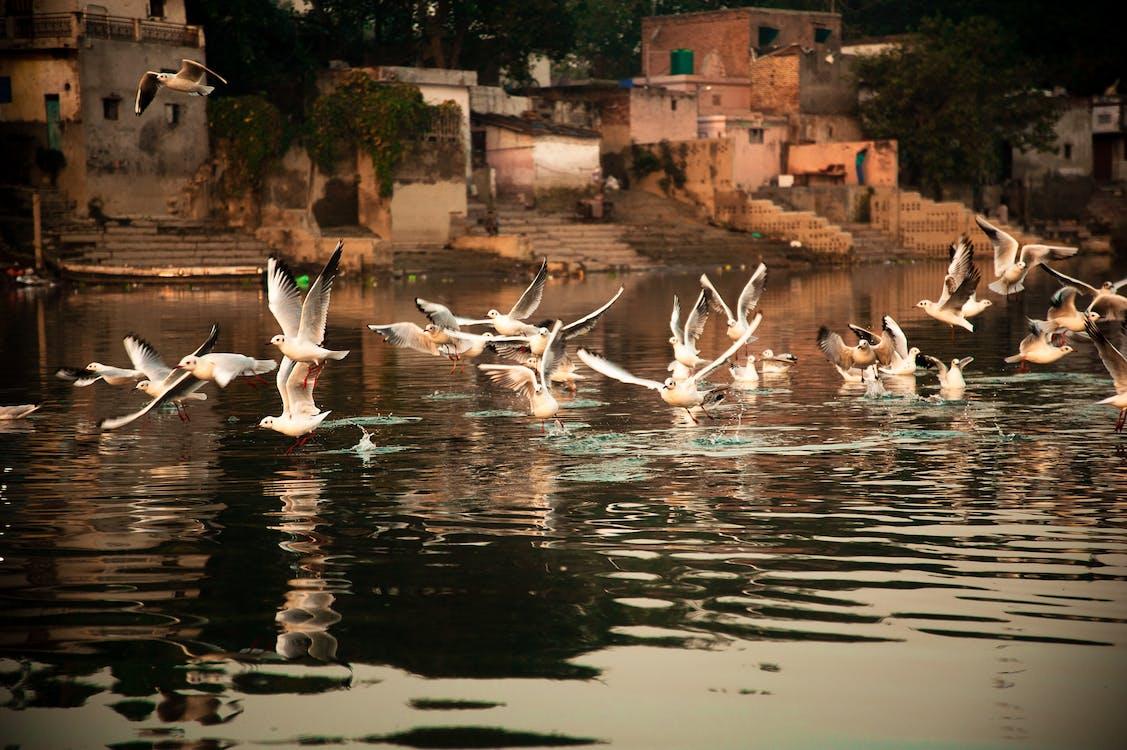 Birds Above Body Of Water
