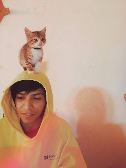 Foto profissional grátis de cara de gato, criança, gatinho