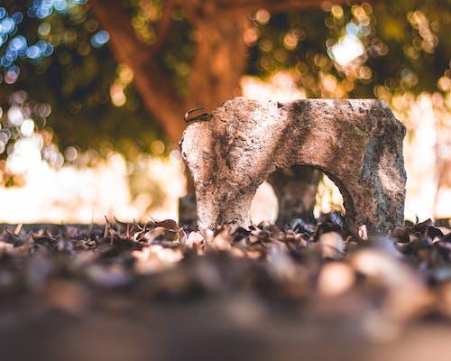 パーク, 目的, 緑色, 落ち葉の無料の写真素材