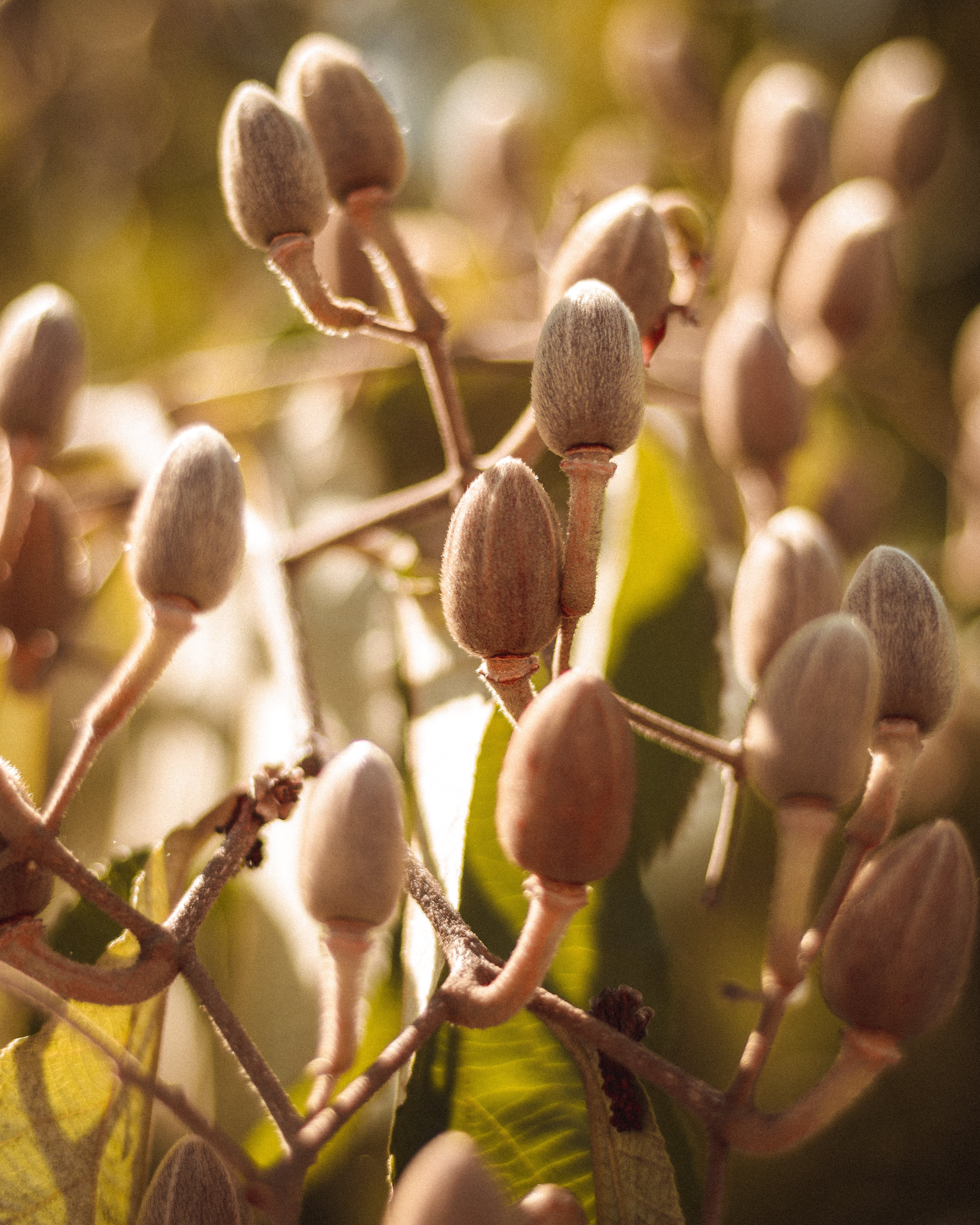 Free stock photo of autumn colors, flower buds, green leaves