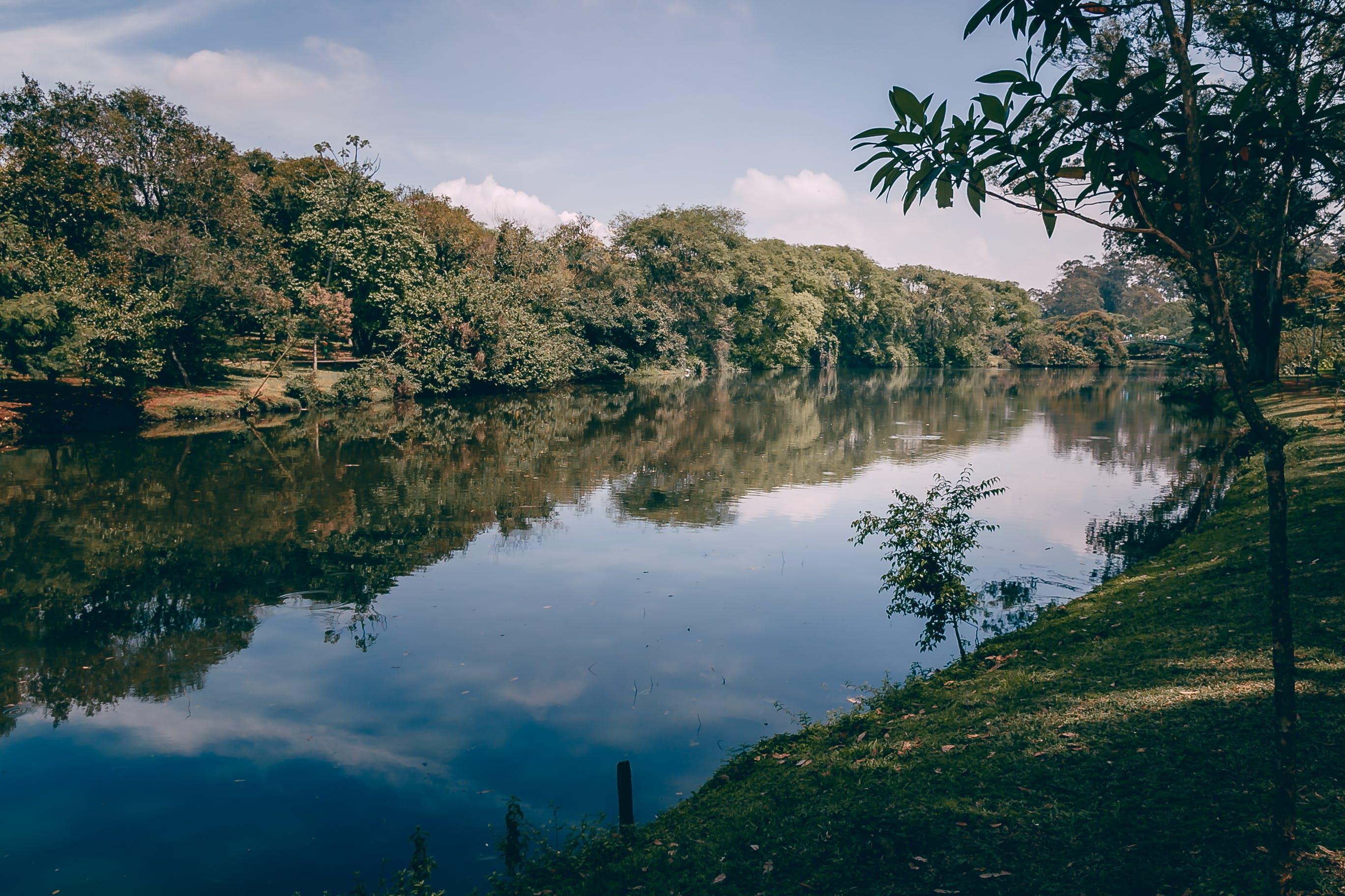 Gratis lagerfoto af brasiliansk, camping, central park, fjeder