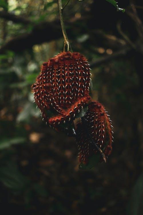 Fotos de stock gratuitas de al aire libre, arácnido, araña, árbol