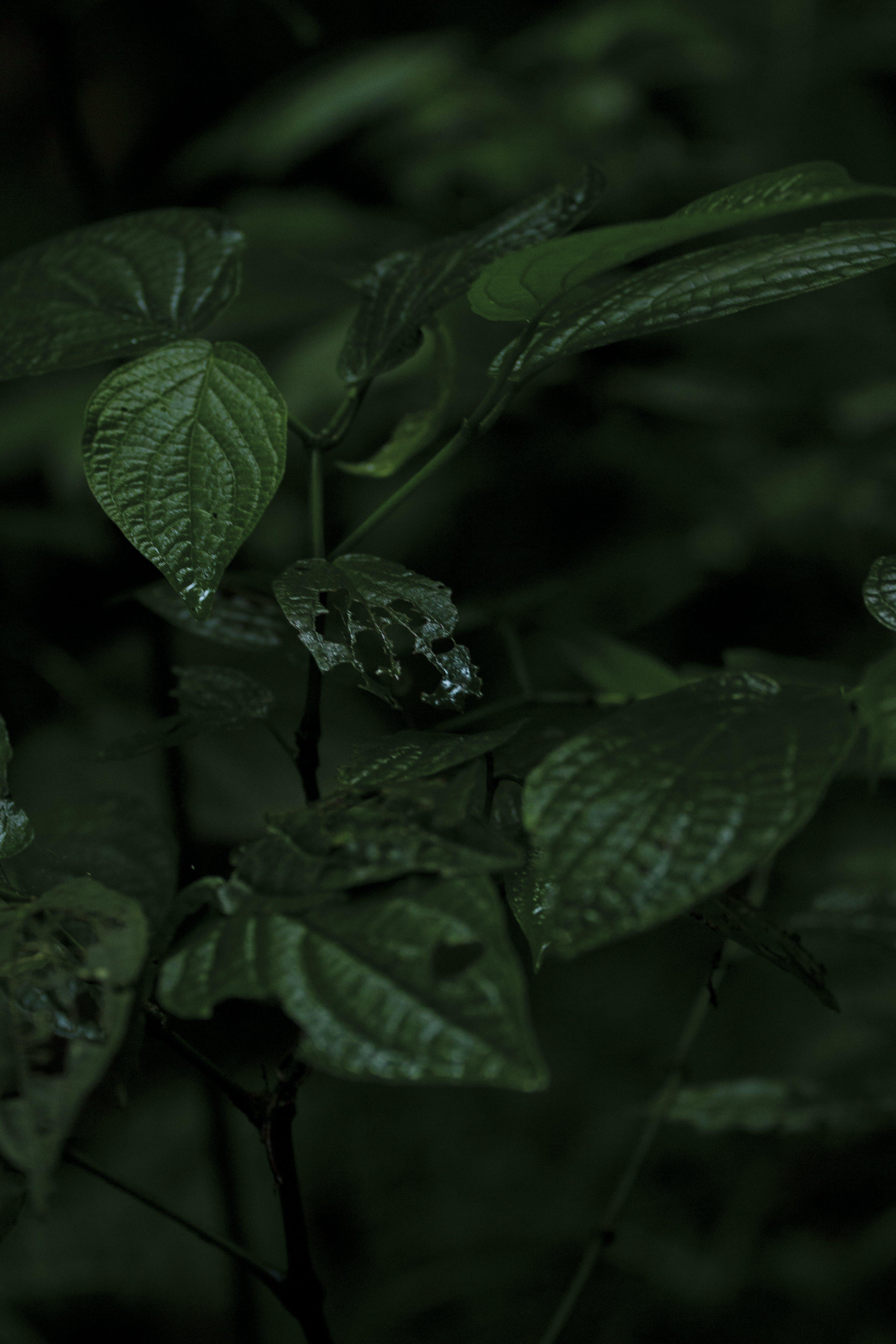 Gratis lagerfoto af blade, grøn, have, plante