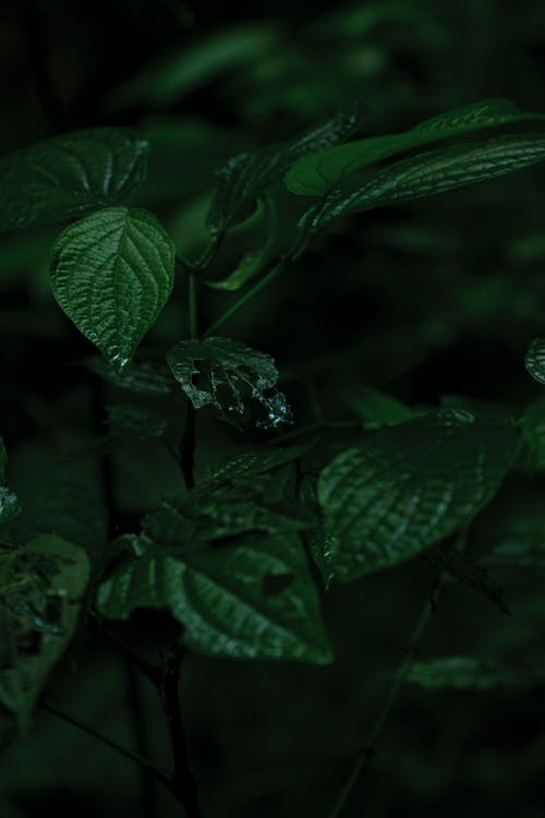 Безкоштовне стокове фото на тему «завод, зелений, зростання, листя»