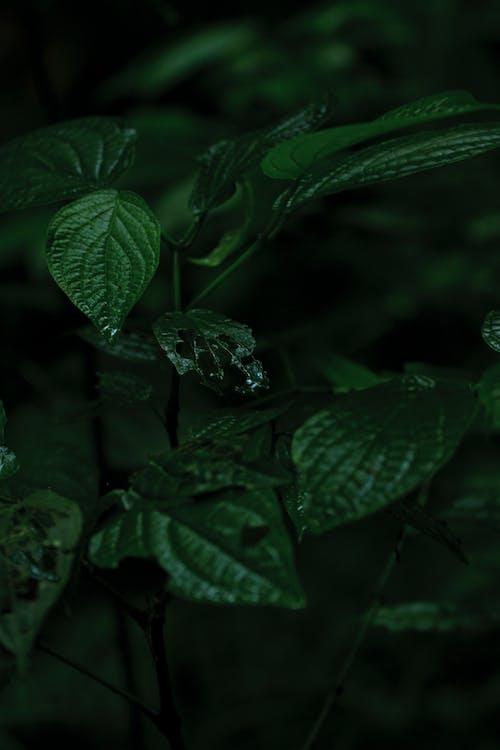 grön, löv, trädgård