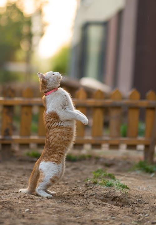 Fotobanka sbezplatnými fotkami na tému bicolor cat