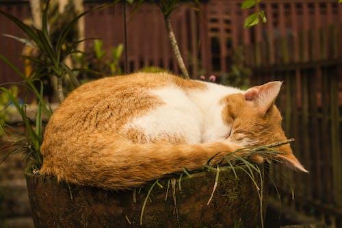 Gratis arkivbilde med foto, katt, landskap, landskapsfotografering