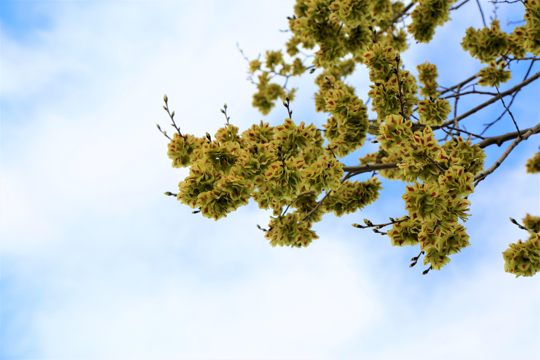 Kostenloses Stock Foto zu #natur, baum, bitki, blume