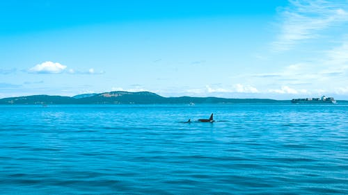 Kostenloses Stock Foto zu atlantisch, blautöne, kanada, meer