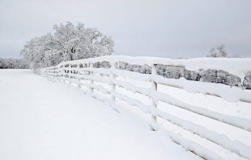 Photos gratuites de arbre, barrière, campagne, enneigé
