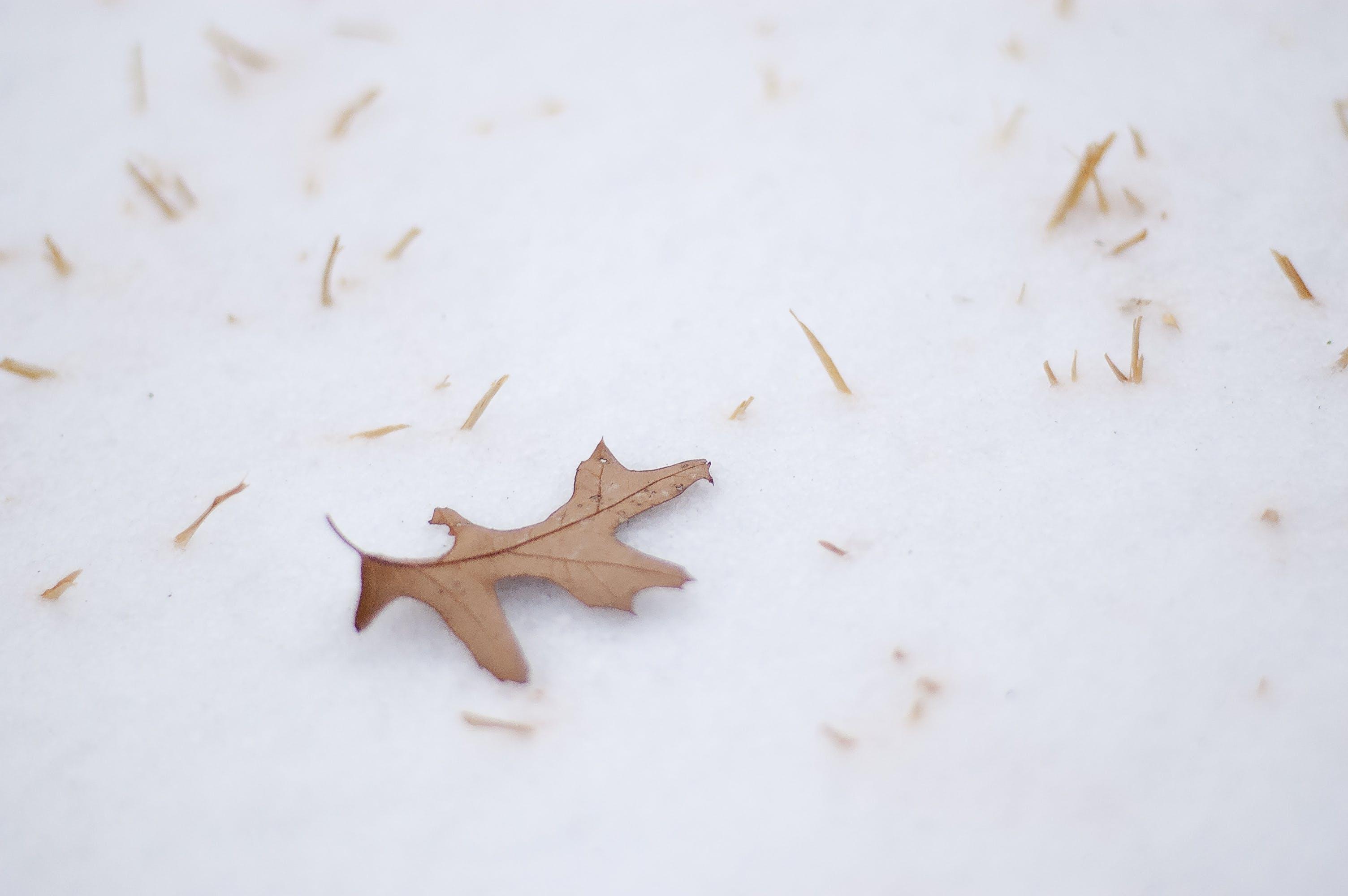 Foto profissional grátis de com frio, folha, folha seca, gelo