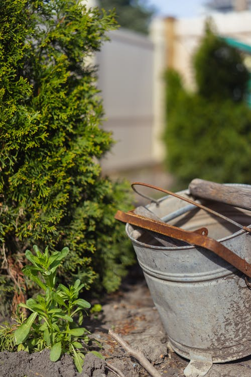 Free stock photo of backyard, bucket