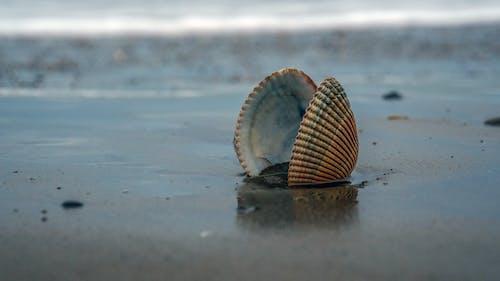 Fotobanka sbezplatnými fotkami na tému mušľa, oceán, pláž