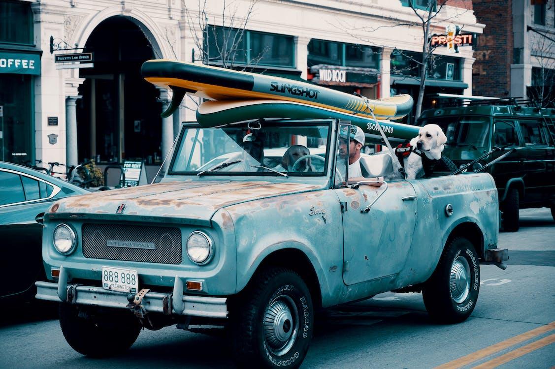 Mann, Der Pickup Mit Zwei Großen Hunden Und Surfbrett Fährt