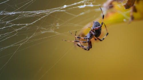 Fotobanka sbezplatnými fotkami na tému internet, pavúk, žltá