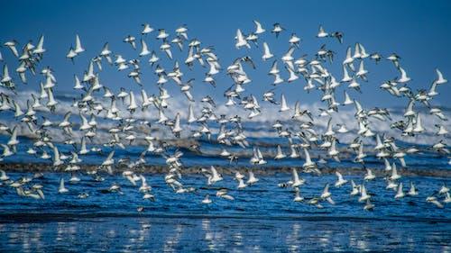 Fotobanka sbezplatnými fotkami na tému modrá, oceán, pláž, vtáky
