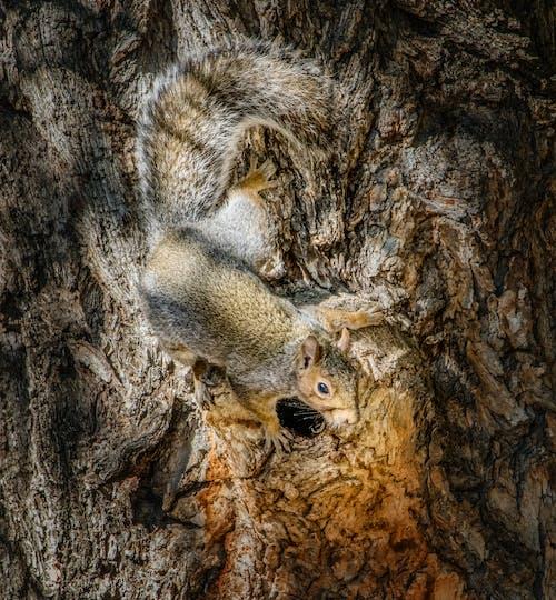Fotobanka sbezplatnými fotkami na tému strom, veverička