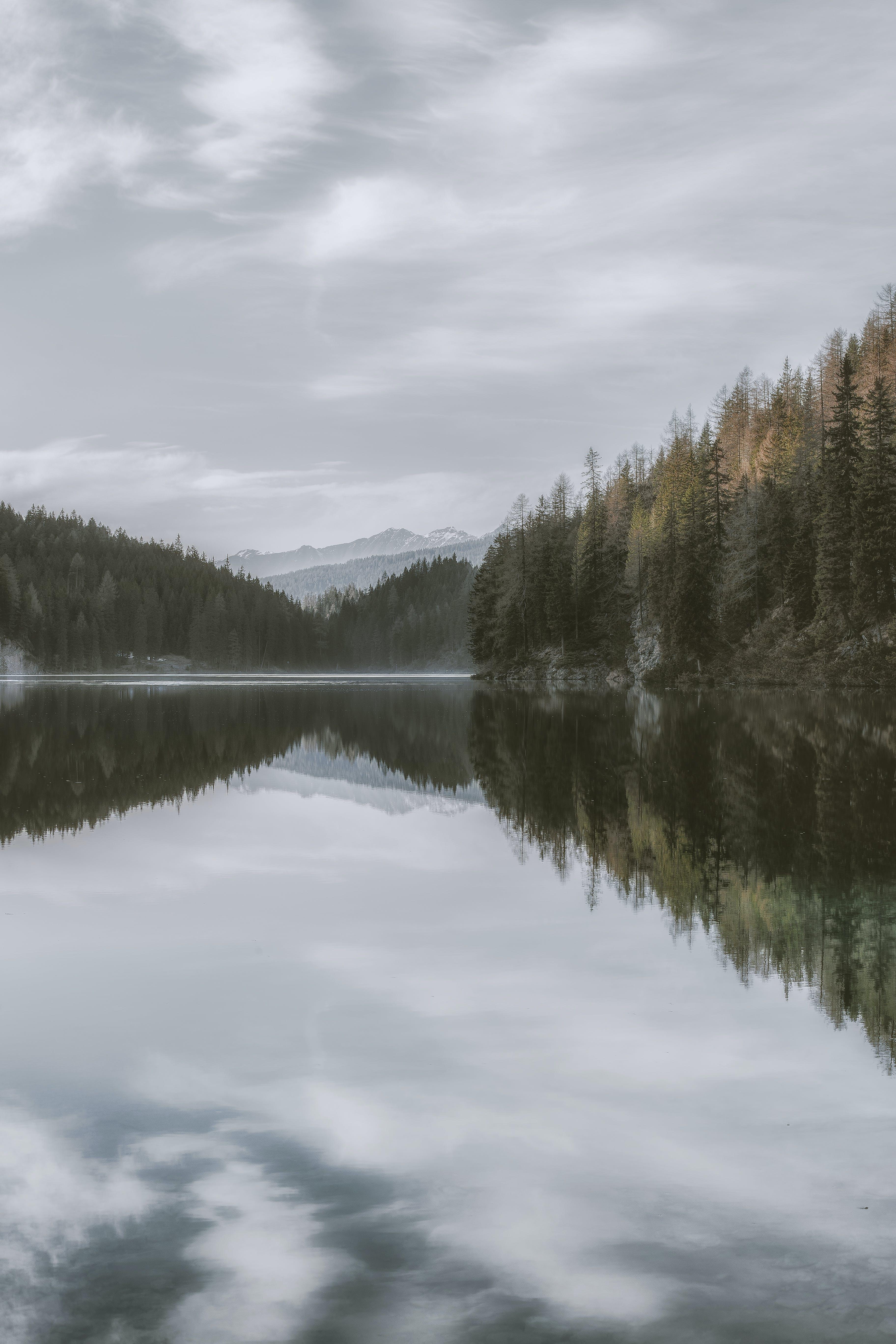 Immagine gratuita di acqua, alberi, boschi, calma