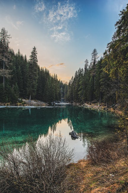 Landscape photo of riverand pine trees