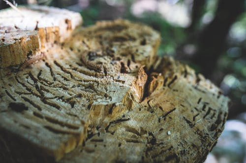 Free stock photo of carved wood, chopped wood, close up, nature