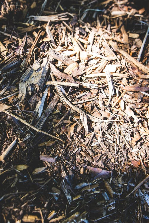 Free stock photo of chipped wood, chopped wood, texture, twigs