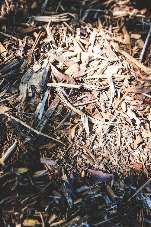 Ảnh lưu trữ miễn phí về cành cây, gỗ băm nhỏ, gỗ sứt mẻ, kết cấu