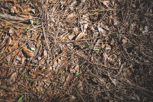 Free stock photo of brown, chips, dried leaves, leaves