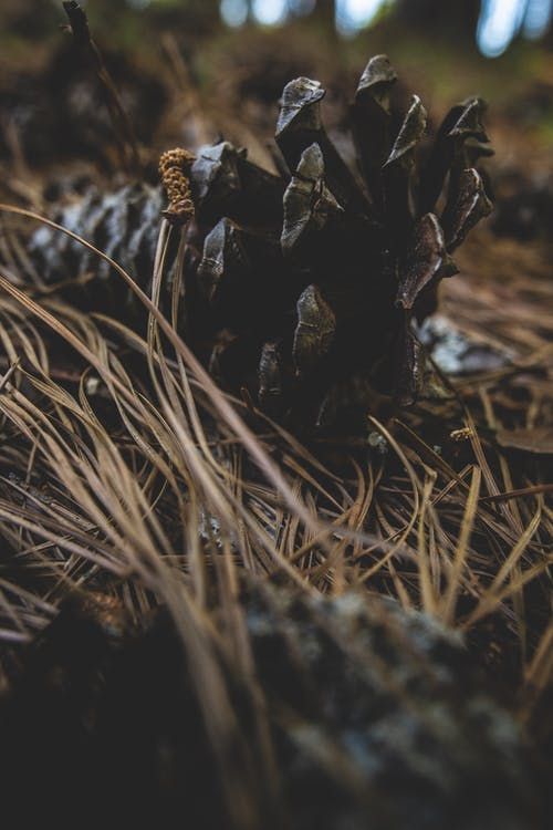 Free stock photo of #nature, autumn, brown, fall