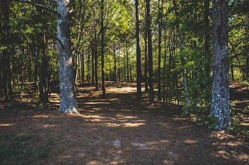 Foto profissional grátis de ao ar livre, árvores, caminho, dia