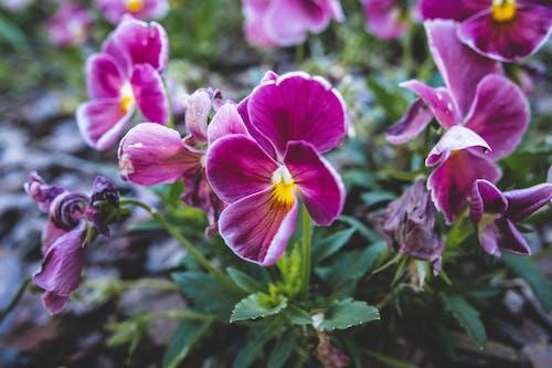 Free stock photo of beautiful flower, beautiful flowers, bush
