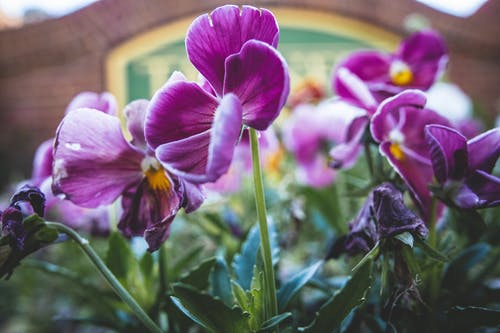 Free stock photo of #nature, beautiful flower, beautiful flowers, bush