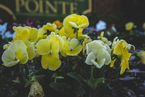 Ảnh lưu trữ miễn phí về bông hoa xinh đẹp, bụi cây, hoa, Hoa màu vàng