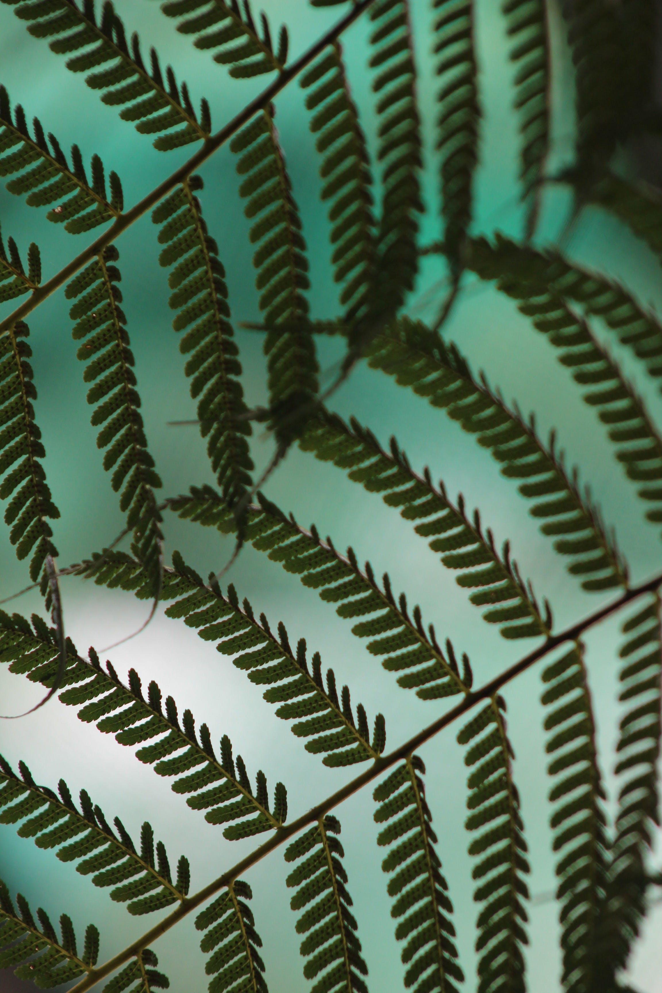 Бесплатное стоковое фото с декорация, дизайн, завод, зеленый