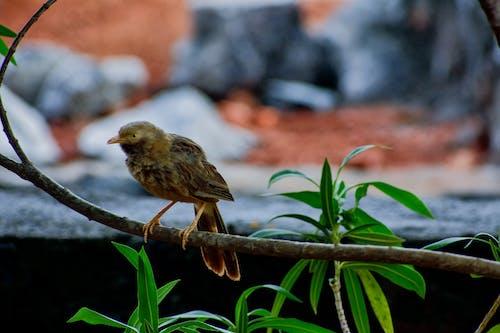 Foto d'estoc gratuïta de animals bufons, au, bellesa a la natura, bellesa natural