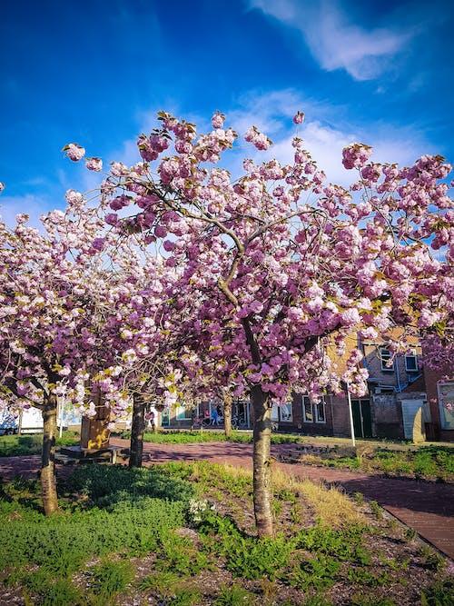Kostnadsfri bild av blommor, gräs, himmel, natur