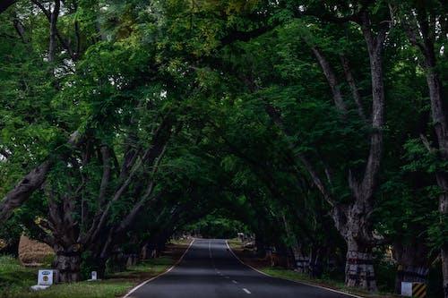 คลังภาพถ่ายฟรี ของ #ธรรมชาติ, ความงามของธรรมชาติ, ความงามในธรรมชาติ, ต้นไม้
