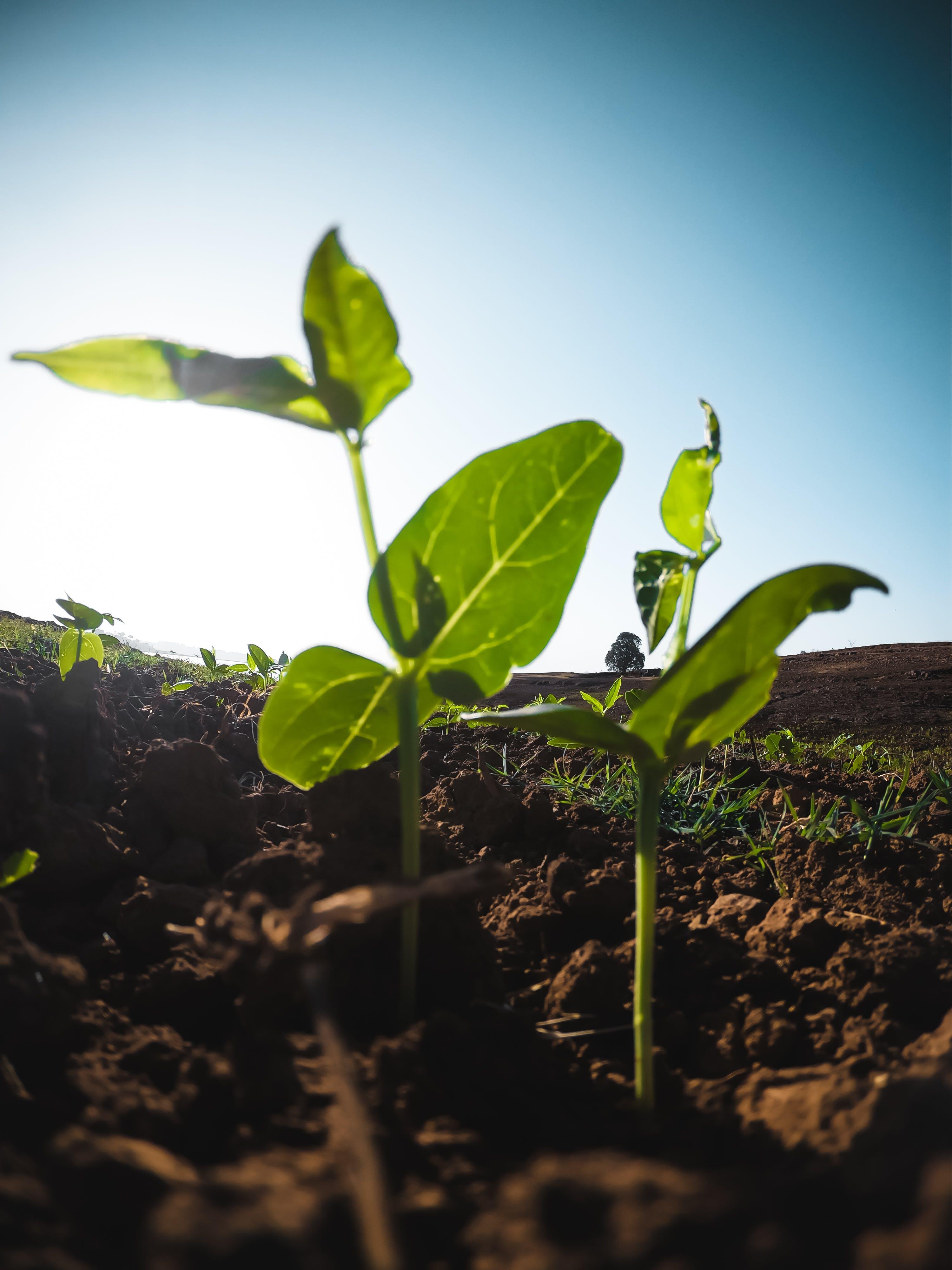 Foto d'estoc gratuïta de agricultura, brot, créixer, fulles