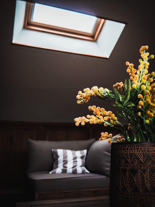 Gratis stockfoto met bank, binnen, binnenshuis, bloemen