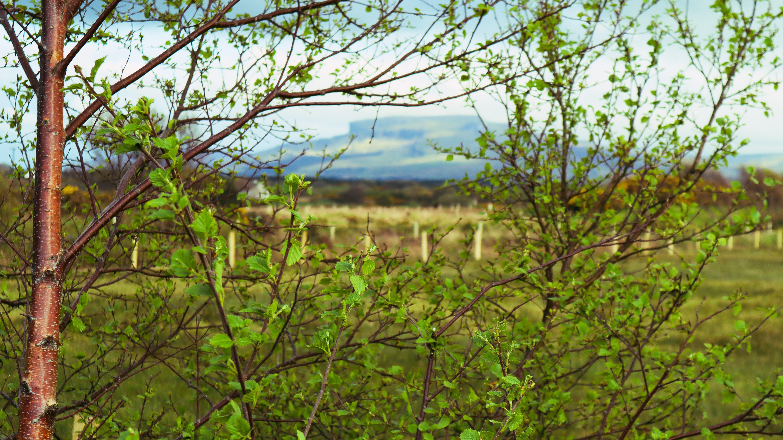 Free stock photo of #nature, beautiful landscape, branch, defocused
