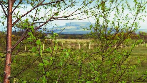 ぼやける, 山, 枝, 空の無料の写真素材