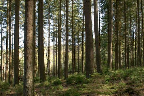 Fotobanka sbezplatnými fotkami na tému lesy, príroda, prostredie, stromy