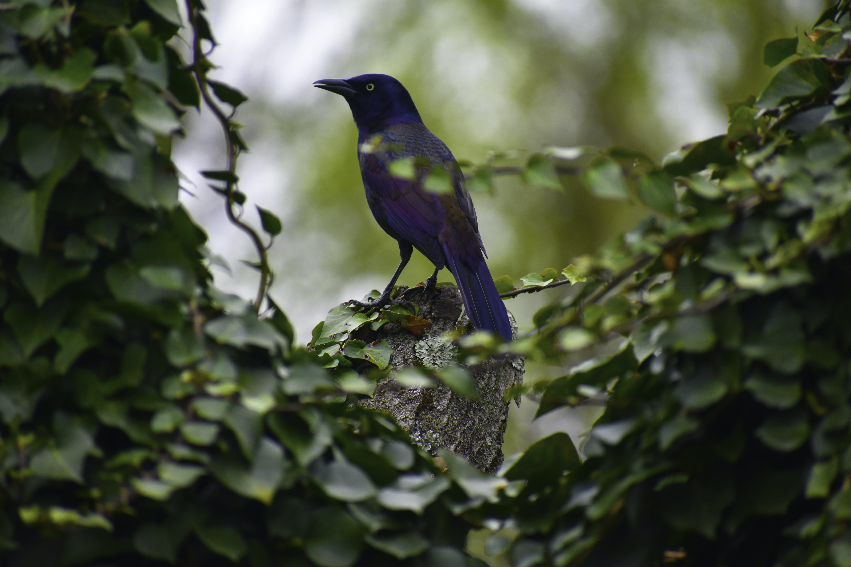 Gratis lagerfoto af dyr, dyreliv, fugl, lille