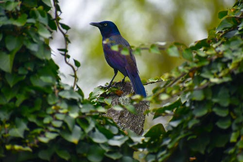 Blue Bird Perched