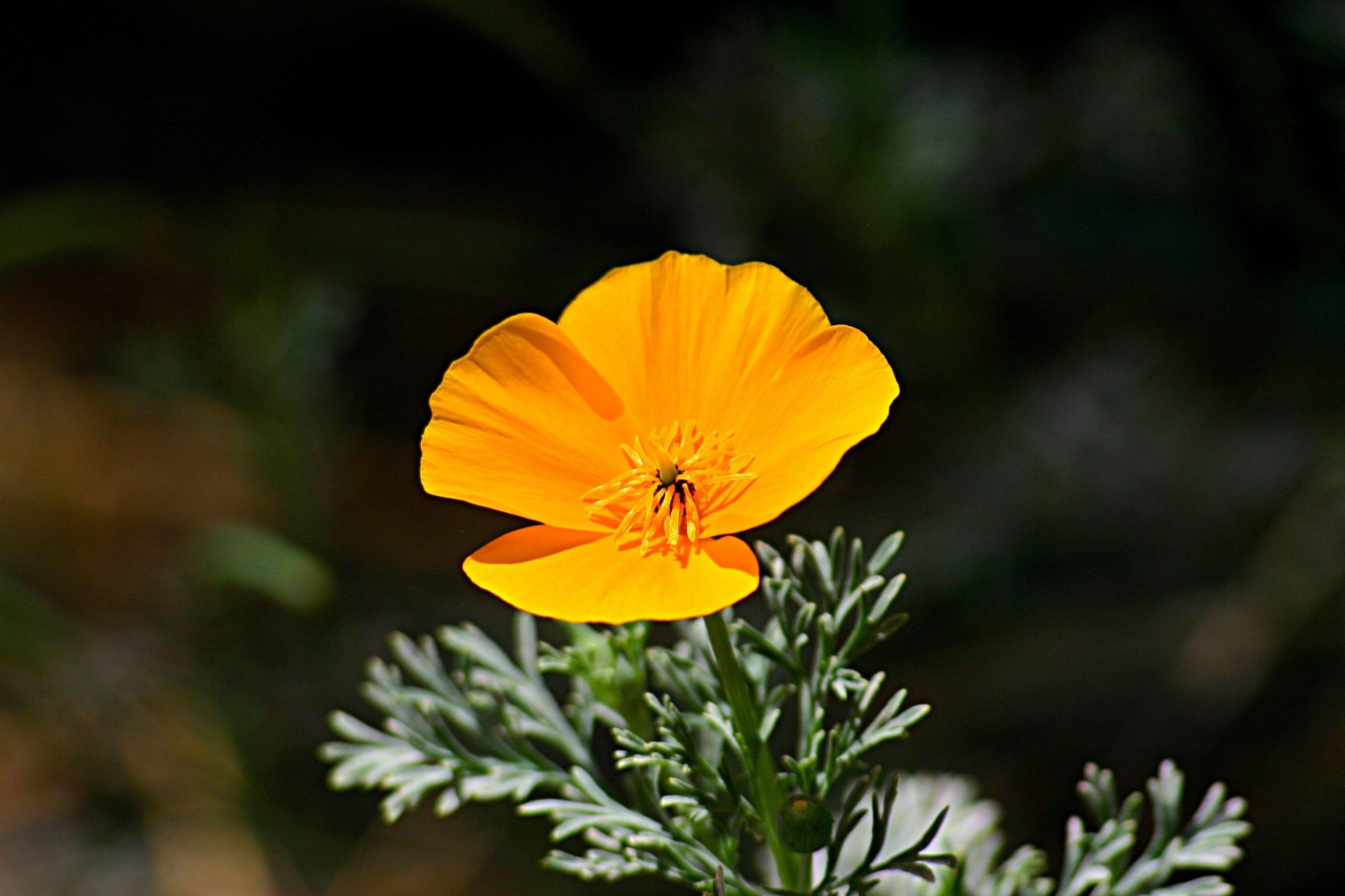 ayrıntı, Bahçe, bitki örtüsü, büyümek içeren Ücretsiz stok fotoğraf