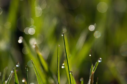 Focus Photography Of Grass