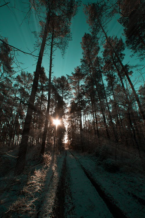 Ingyenes stockfotó ég, erdő, fák, hó témában