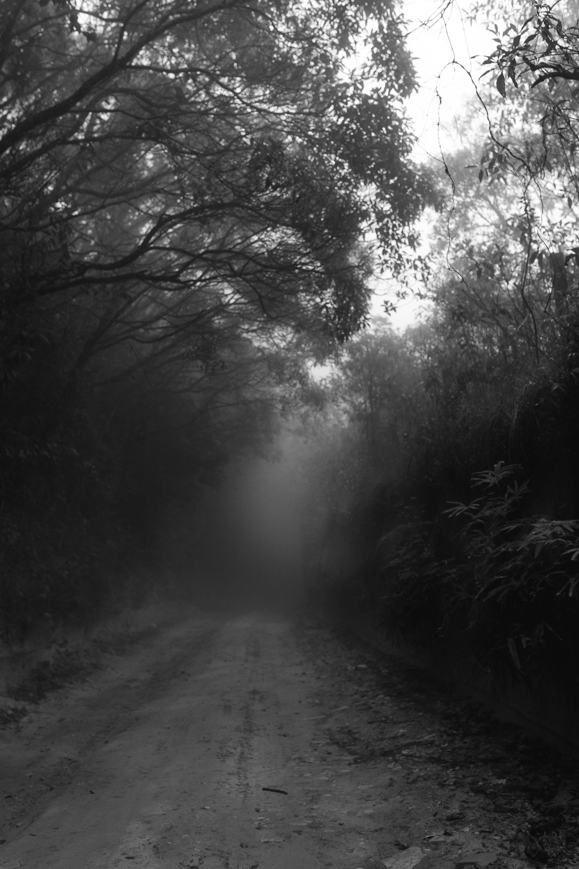 Ảnh lưu trữ miễn phí về bí ẩn, bình minh, cây, có sương mù