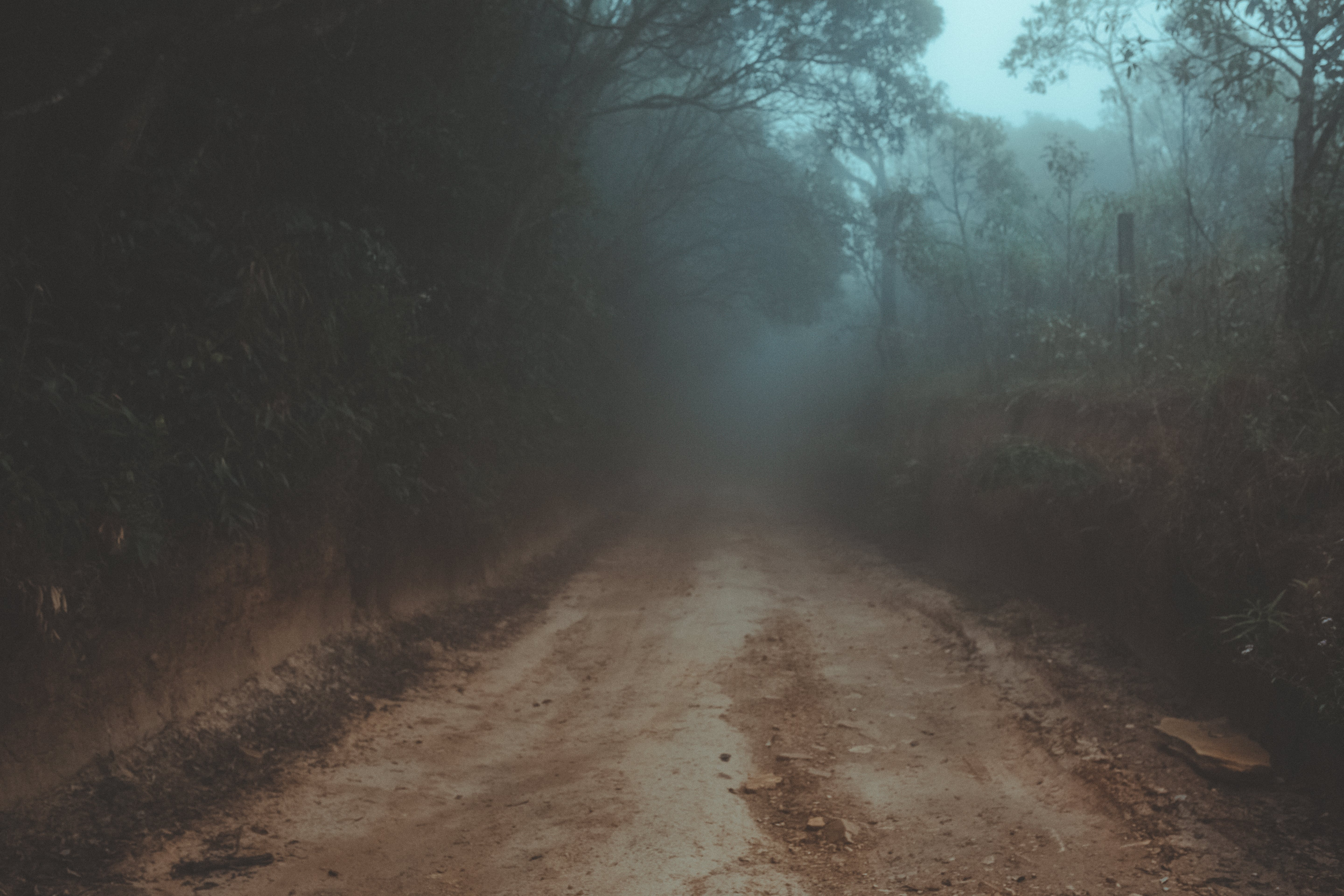 Dirt Track Between Trees and Plants during Foggy Daytime