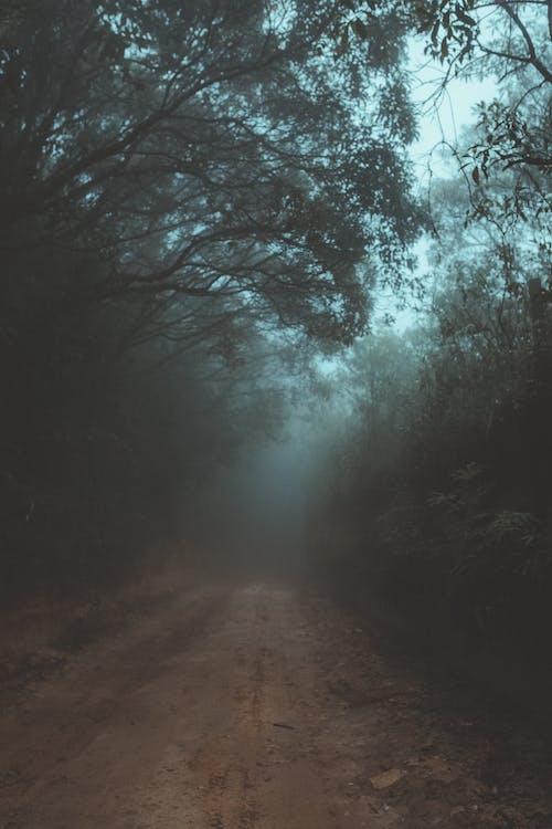 Gratis lagerfoto af dagslys, dis, landskab, lys