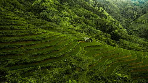 View of Terraces Carved Into the Mountains